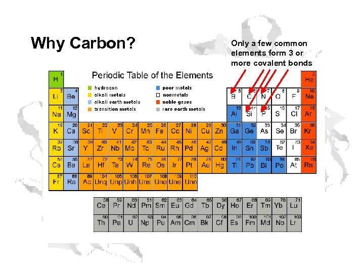 Why Carbon? Only a few common elements form 3 or more covalent bonds