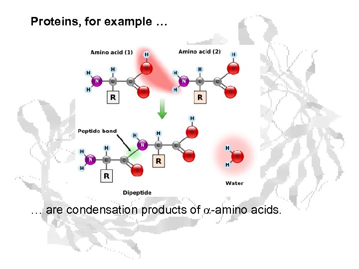 Proteins, for example … … are condensation products of a-amino acids.