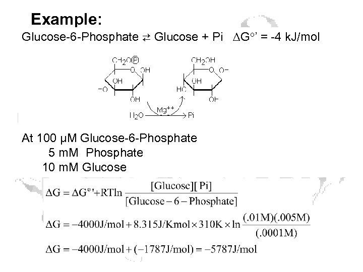 Example: Glucose-6 -Phosphate ⇄ Glucose + Pi ∆Go' = -4 k. J/mol At 100