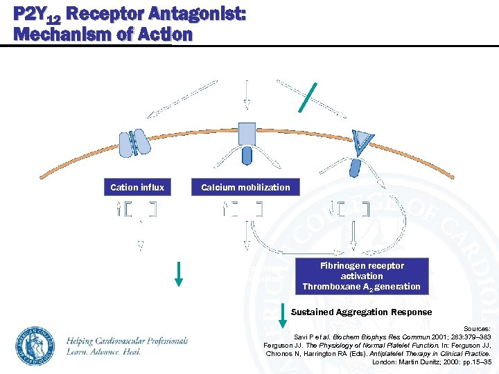 P 2 Y 12 Receptor Antagonist: Mechanism of Action P 2 Y 12 Receptor
