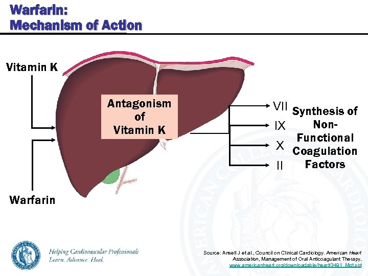 Warfarin: Mechanism of Action Vitamin K Antagonism of Vitamin K VII Synthesis of Non.