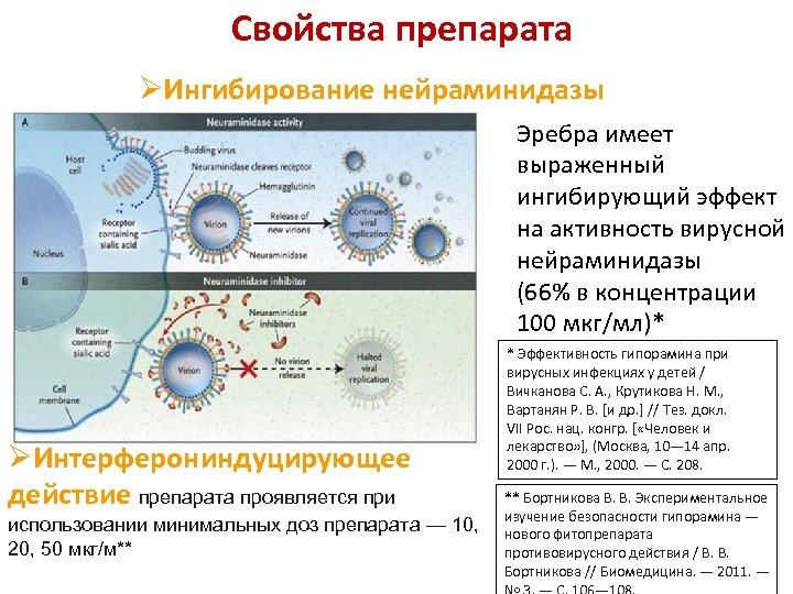 Свойства препарата ØИнгибирование нейраминидазы Эребра имеет выраженный ингибирующий эффект на активность вирусной нейраминидазы (66%