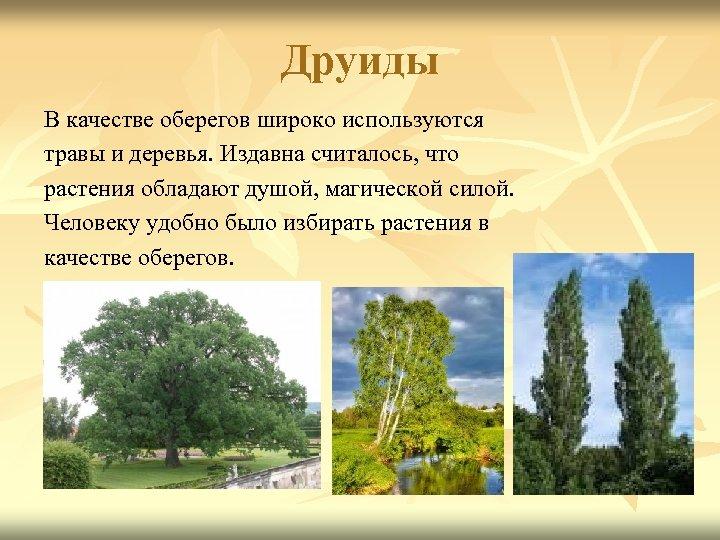 Друиды В качестве оберегов широко используются травы и деревья. Издавна считалось, что растения обладают