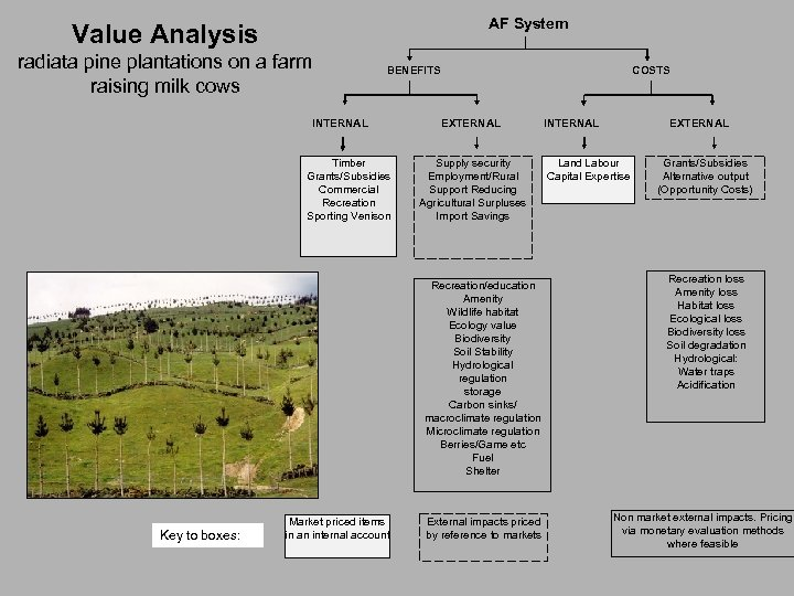 AF System Value Analysis radiata pine plantations on a farm raising milk cows COSTS