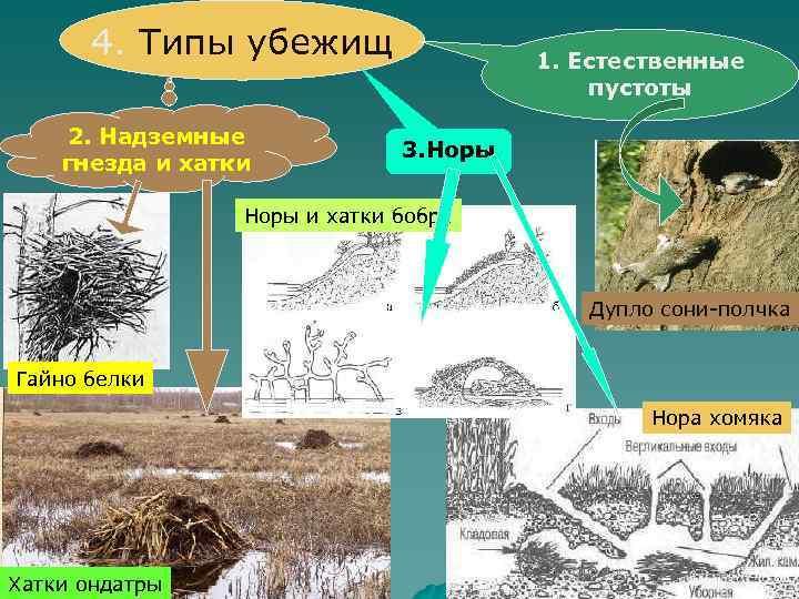 4. Типы убежищ 2. Надземные гнезда и хатки 1. Естественные пустоты 3. Норы и