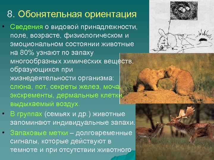 8. Обонятельная ориентация • Сведения о видовой принадлежности, поле, возрасте, физиологическом и эмоциональном состоянии