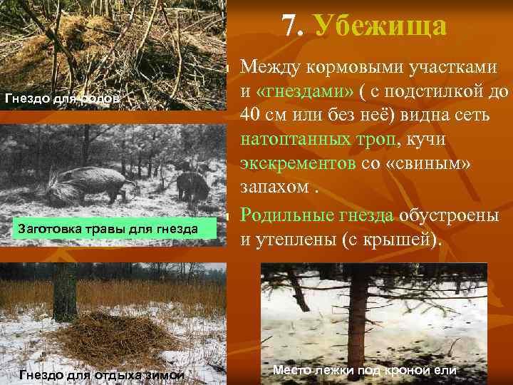 7. Убежища n Гнездо для родов Заготовка травы для гнезда Гнездо для отдыха зимой