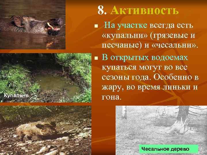 8. Активность n n Купальня На участке всегда есть «купальни» (грязевые и песчаные) и