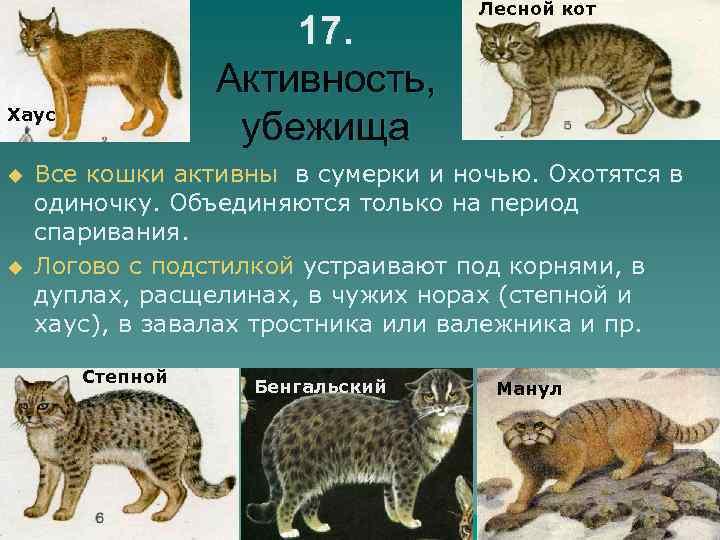 17. Активность, убежища Хаус u u Лесной кот Все кошки активны в сумерки и