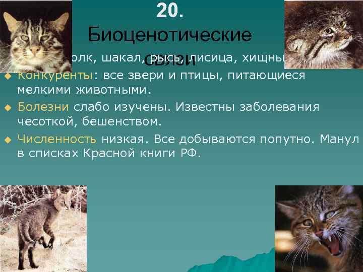 20. Биоценотические u Враги: волк, шакал, связи рысь, лисица, хищные птицы. u u u