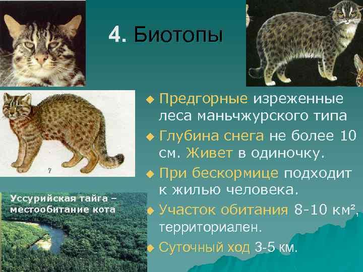 4. Биотопы Предгорные изреженные леса маньчжурского типа u Глубина снега не более 10 см.