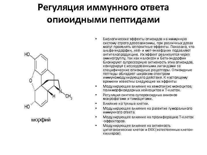 Регуляция иммунного ответа опиоидными пептидами • • • морфий • • Биологические эффекты опиоидов