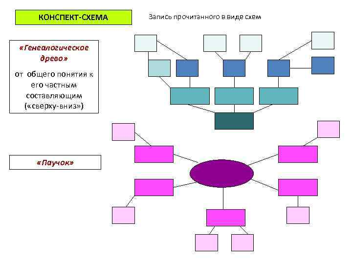 КОНСПЕКТ-СХЕМА «Генеалогическое древо» от общего понятия к его частным составляющим ( «сверху-вниз» ) «Паучок»