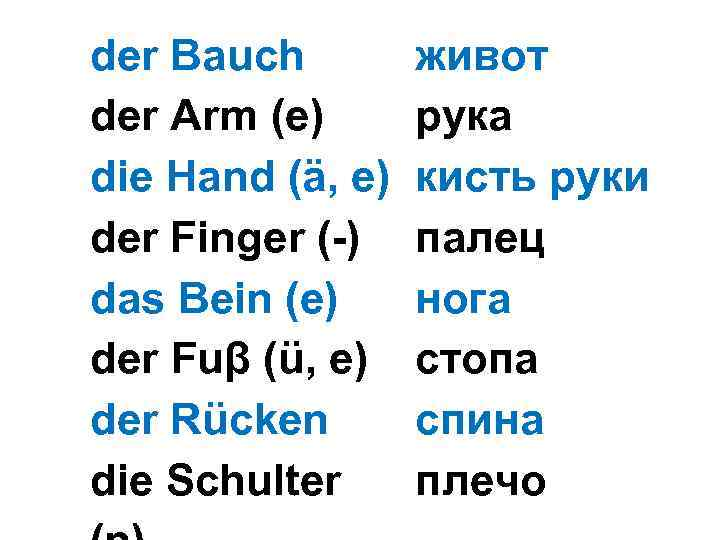 der Bauch der Arm (e) die Hand (ä, e) der Finger (-) das Bein