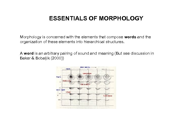 ESSENTIALS OF MORPHOLOGY Morphology is concerned with the elements that compose words and the