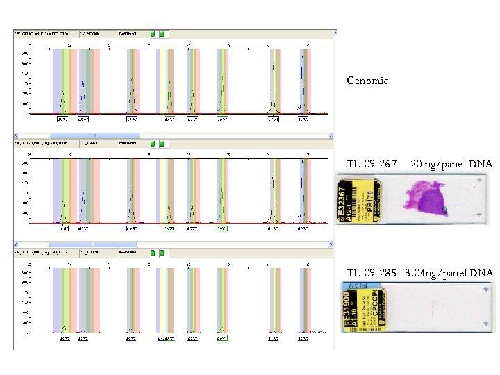 Genomic TL-09 -267 20 ng/panel DNA TL-09 -285 3. 04 ng/panel DNA