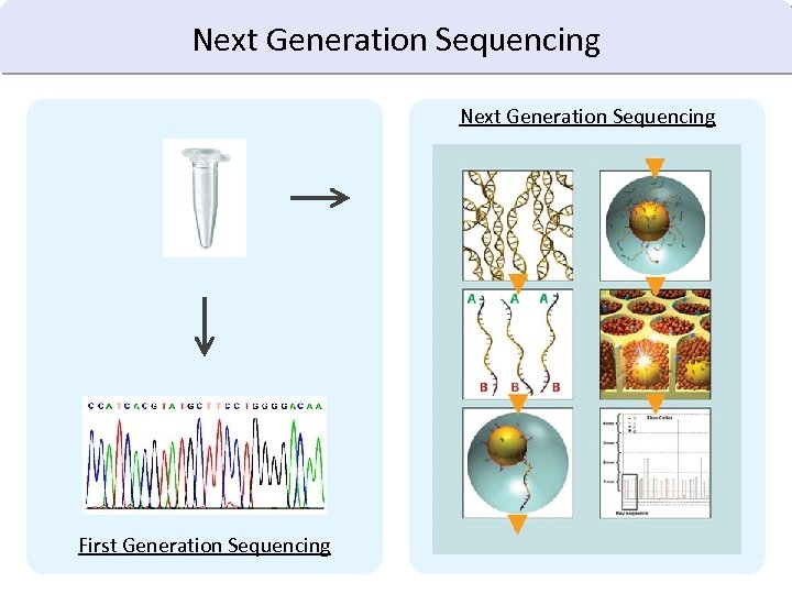 Next Generation Sequencing First Generation Sequencing
