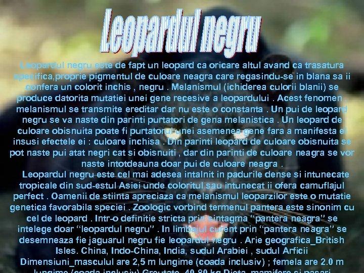 Leopardul negru este de fapt un leopard ca oricare altul avand ca trasatura specifica,