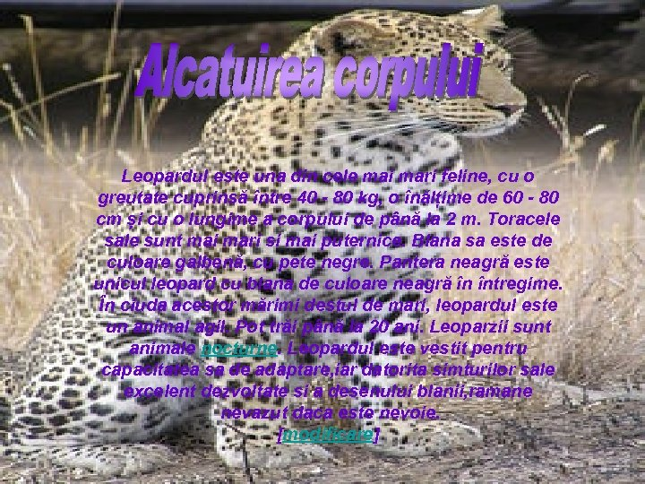 Leopardul este una din cele mai mari feline, cu o greutate cuprinsă între 40