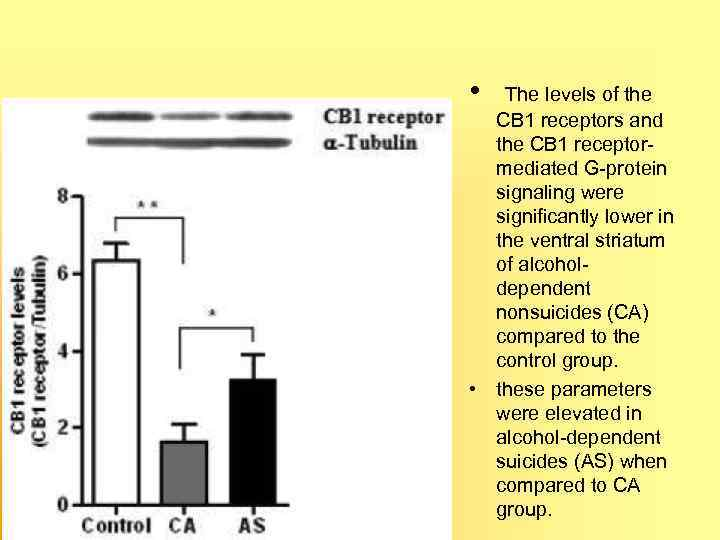 • The levels of the CB 1 receptors and the CB 1 receptor