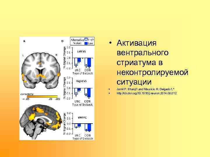 • Активация вентрального стриатума в неконтролируемой ситуации • • Jamil P. Bhanji 1