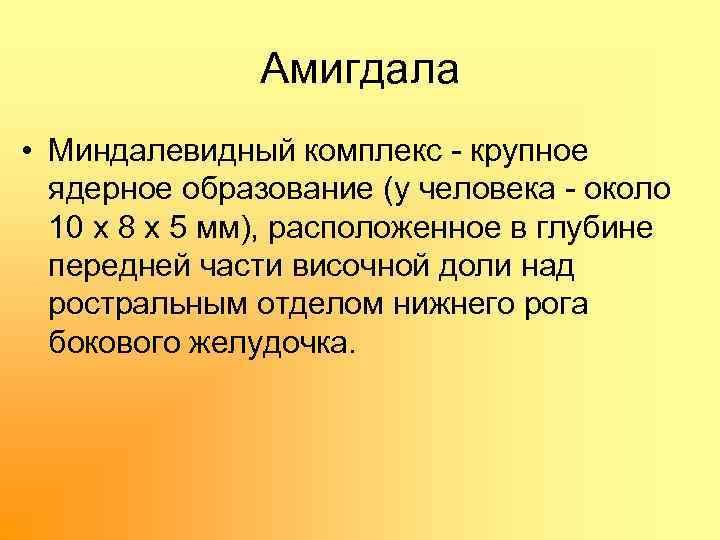 Амигдала • Миндалевидный комплекс крупное ядерное образование (у человека около 10 х 8 х