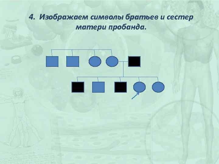 4. Изображаем символы братьев и сестер матери пробанда.