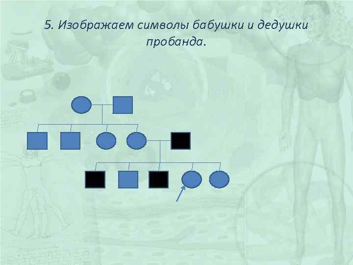 5. Изображаем символы бабушки и дедушки пробанда.