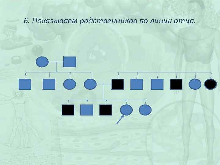 6. Показываем родственников по линии отца.
