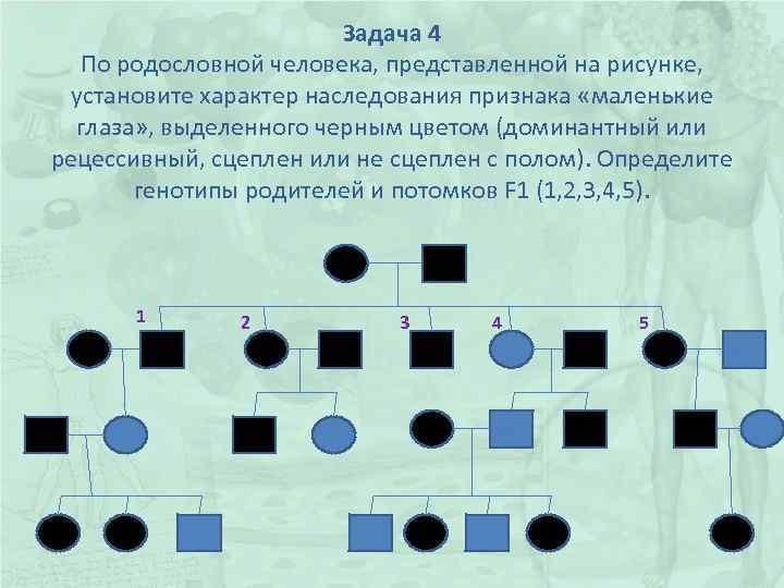 Задача 4 По родословной человека, представленной на рисунке, установите характер наследования признака «маленькие глаза»