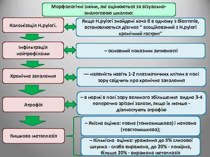 Морфологічні зміни, які оцінюються за візуальноаналоговою шкалою: Колонізація H. pylori. Якщо H. pylori знайдені