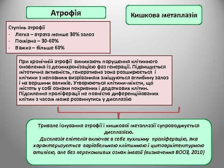 Атрофія Кишкова метаплазія Ступінь атрофії - Легка – втрата менше 30% залоз - Помірна