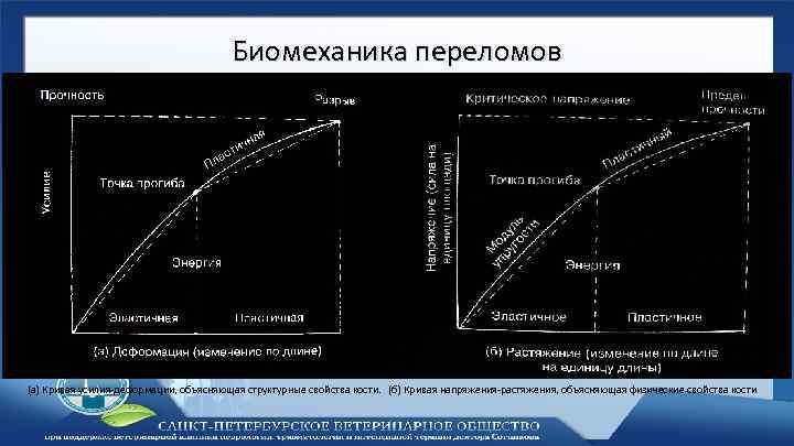 Биомеханика переломов (а) Кривая усилия-деформации, объясняющая структурные свойства кости. (б) Кривая напряжения-растяжения, объясняющая физические