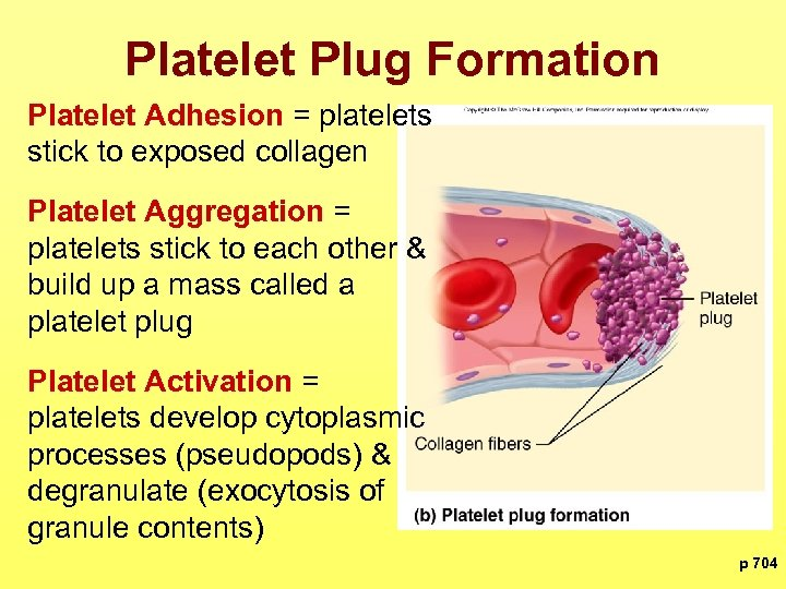Platelet Plug Formation Platelet Adhesion = platelets stick to exposed collagen Platelet Aggregation =