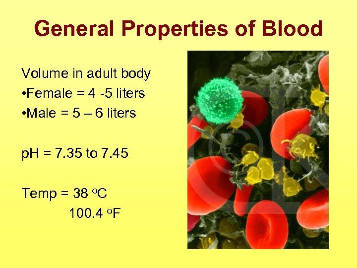 General Properties of Blood Volume in adult body • Female = 4 -5 liters