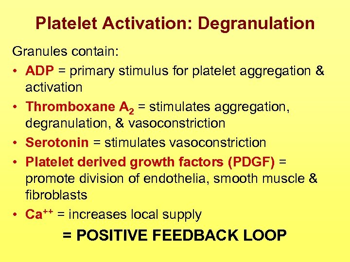 Platelet Activation: Degranulation Granules contain: • ADP = primary stimulus for platelet aggregation &