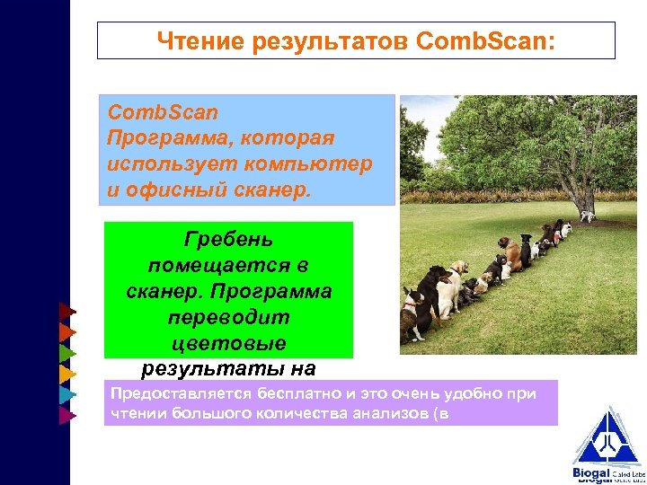 Чтение результатов Comb. Scan: Comb. Scan Программа, которая использует компьютер и офисный сканер. Гребень