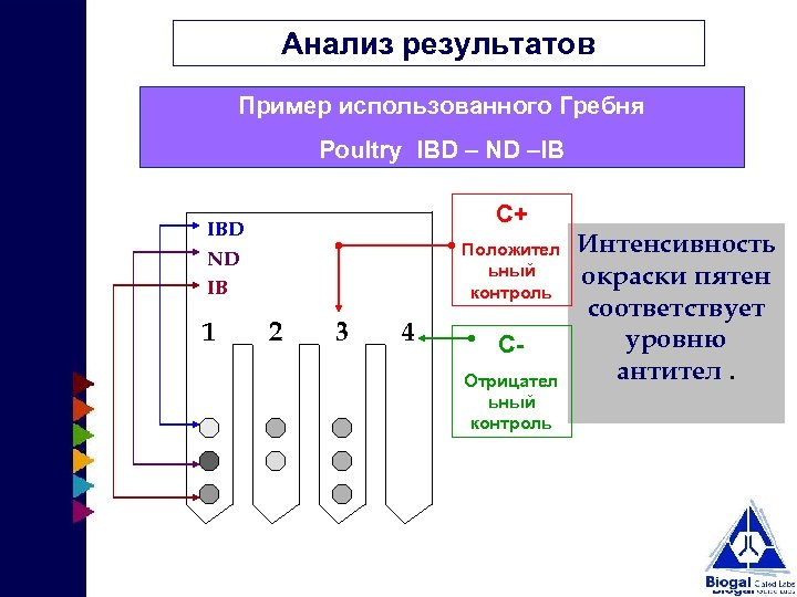 Анализ результатов Пример использованного Гребня Poultry IBD – ND –IB C+ IBD ND IB