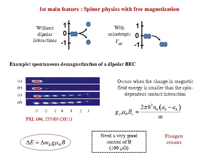 1 st main feature : Spinor physics with free magnetization Without dipolar interactions 1