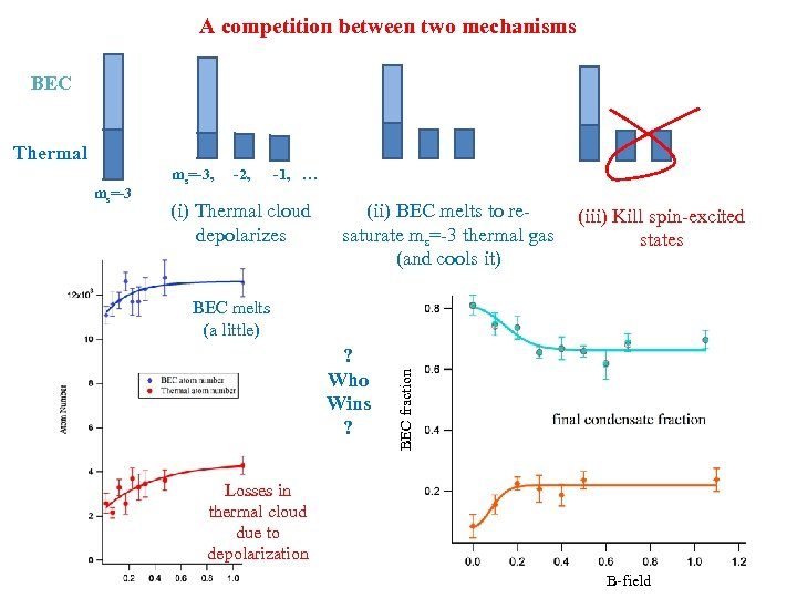 A competition between two mechanisms BEC Thermal (i) Thermal cloud depolarizes (ii) BEC melts