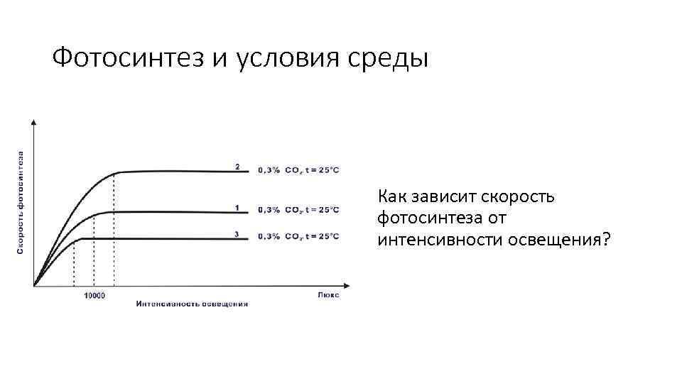 русского зависимость фотосинтеза от внешних условий кратко квадратик низу бисеринка