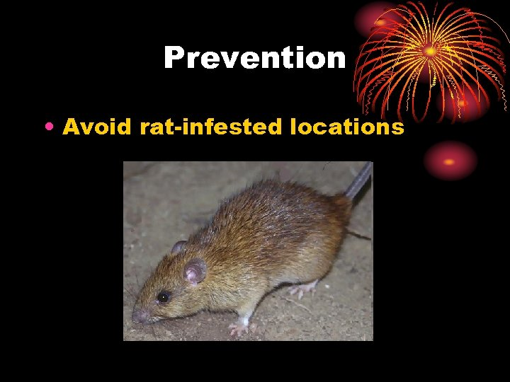 Prevention • Avoid rat-infested locations