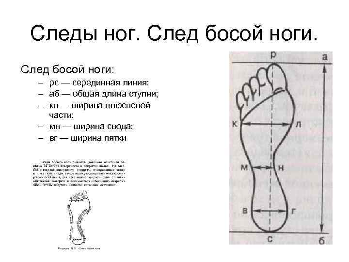 Следы ног. След босой ноги: – рс — серединная линия; – аб — общая