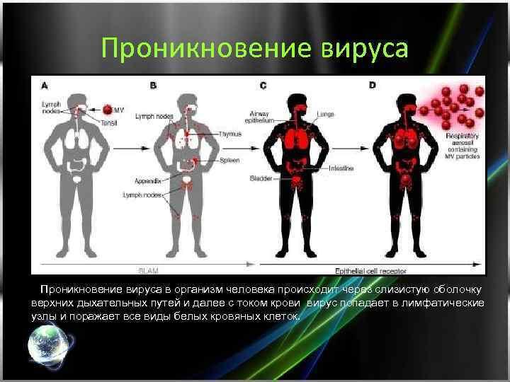 Проникновение вируса в организм человека происходит через слизистую оболочку верхних дыхательных путей и далее