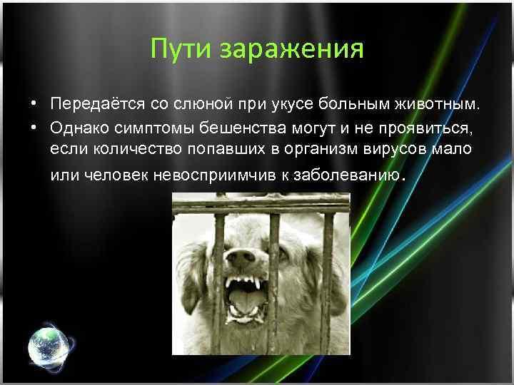 Пути заражения • Передаётся со слюной при укусе больным животным. • Однако симптомы бешенства