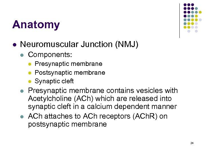 Anatomy l Neuromuscular Junction (NMJ) l Components: l l l Presynaptic membrane Postsynaptic membrane
