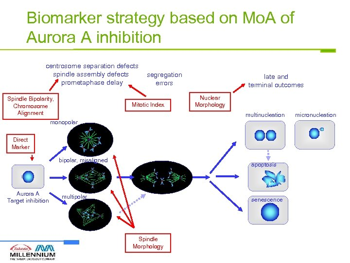 Biomarker strategy based on Mo. A of Aurora A inhibition centrosome separation defects spindle