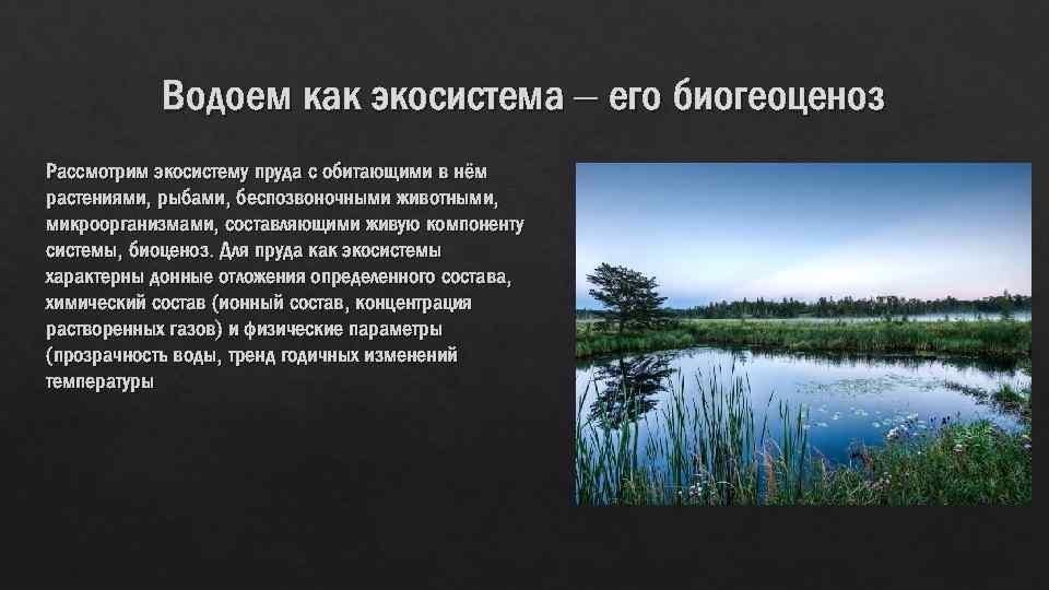 Водоем как экосистема – его биогеоценоз Рассмотрим экосистему пруда с обитающими в нём растениями,