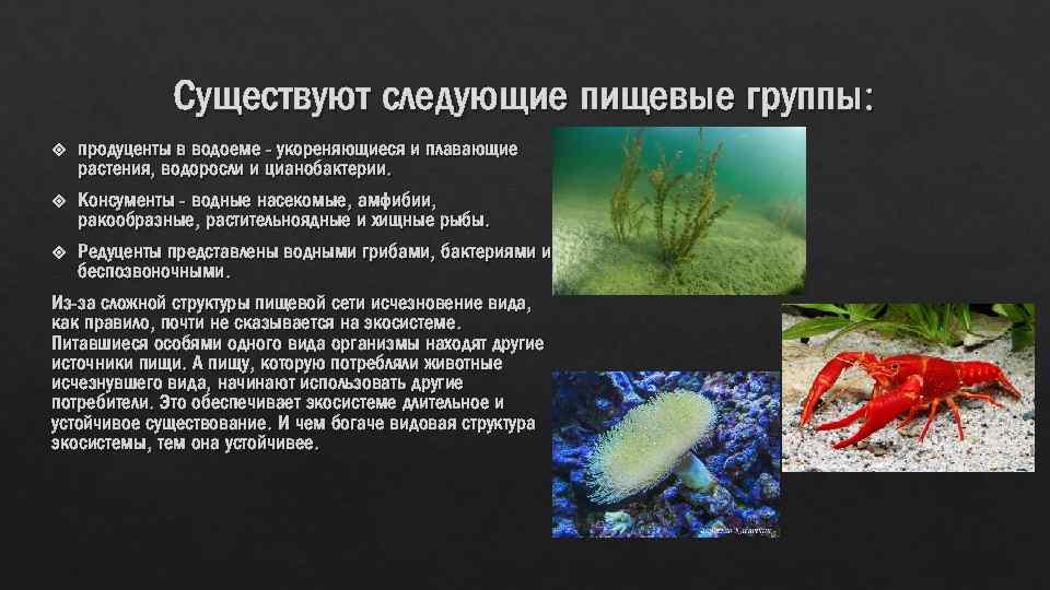 Существуют следующие пищевые группы: продуценты в водоеме - укореняющиеся и плавающие растения, водоросли и