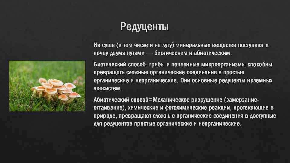 Редуценты На суше (в том числе и на лугу) минеральные вещества поступают в почву